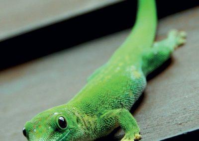 Anjajavy-Bloc-3-Reptiles2