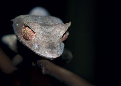 Anjajavy - Reptiles4
