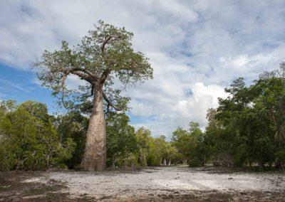 Anjajavy-arbres