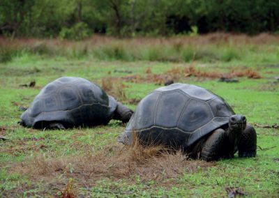 Anjajavy Le Lodge - Tortues