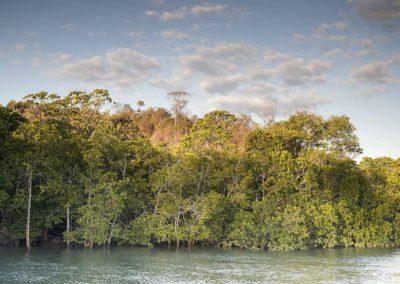 Un-seul-arbre-ne-fait-pas-une-forêt-Proverbe-Malgache