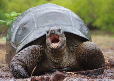 anjajavy-le-lodge-tortues-geantes-madagascar